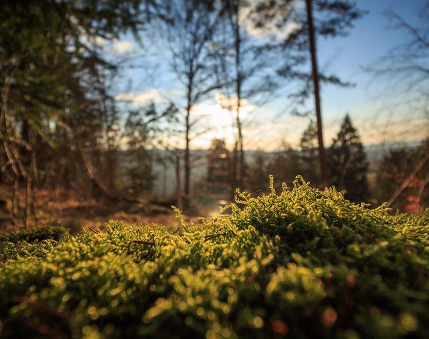 Walderlebnistag für trauernde Familien